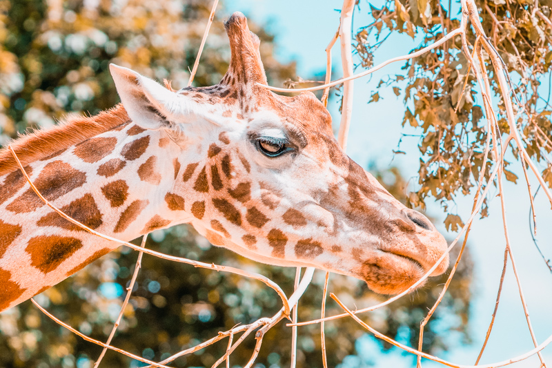 London Zoo A Social Distancing Day Out