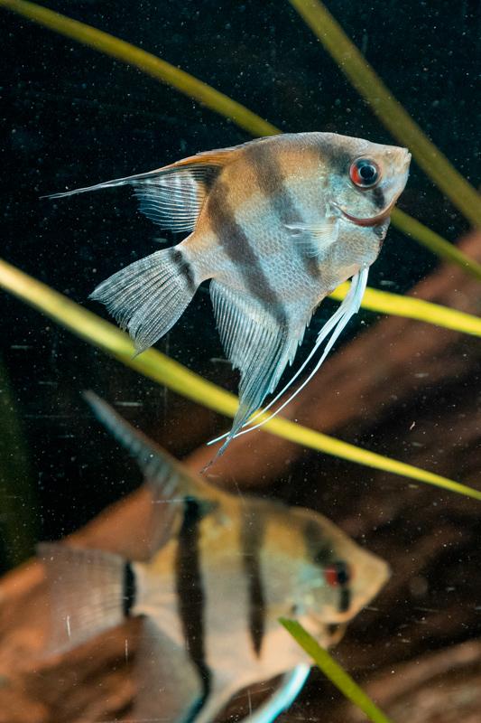 London Zoo fish